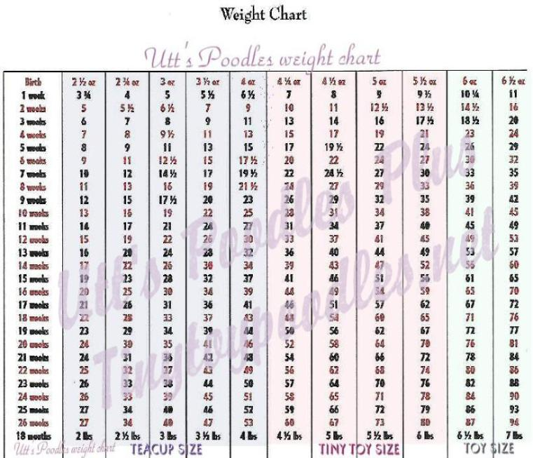 Poodle Weight Weight Chart